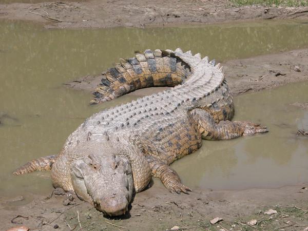 Самое крупное в мире животное